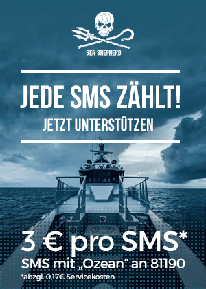 support_sms_2.png